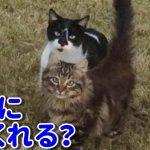 【動物感動実話】野良猫がお世話してくれた女性に息子を連れてきた!1年かけて保護し一夜明けると…