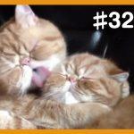 【面白猫動画】可愛くて癒される♪おもしろ猫動画集 #32