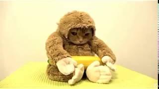 ⁂ニャン長先生⁂おもしろかわいい猫ちゃんず⊛⊛