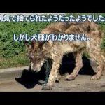【感動】勇敢な飼い犬は毒ヘビに噛まれながらも自らをの体を犠牲にして、家族である7歳の女の子を守ったのだ。