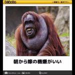 【ボケて】爆笑面白バカ画像#5