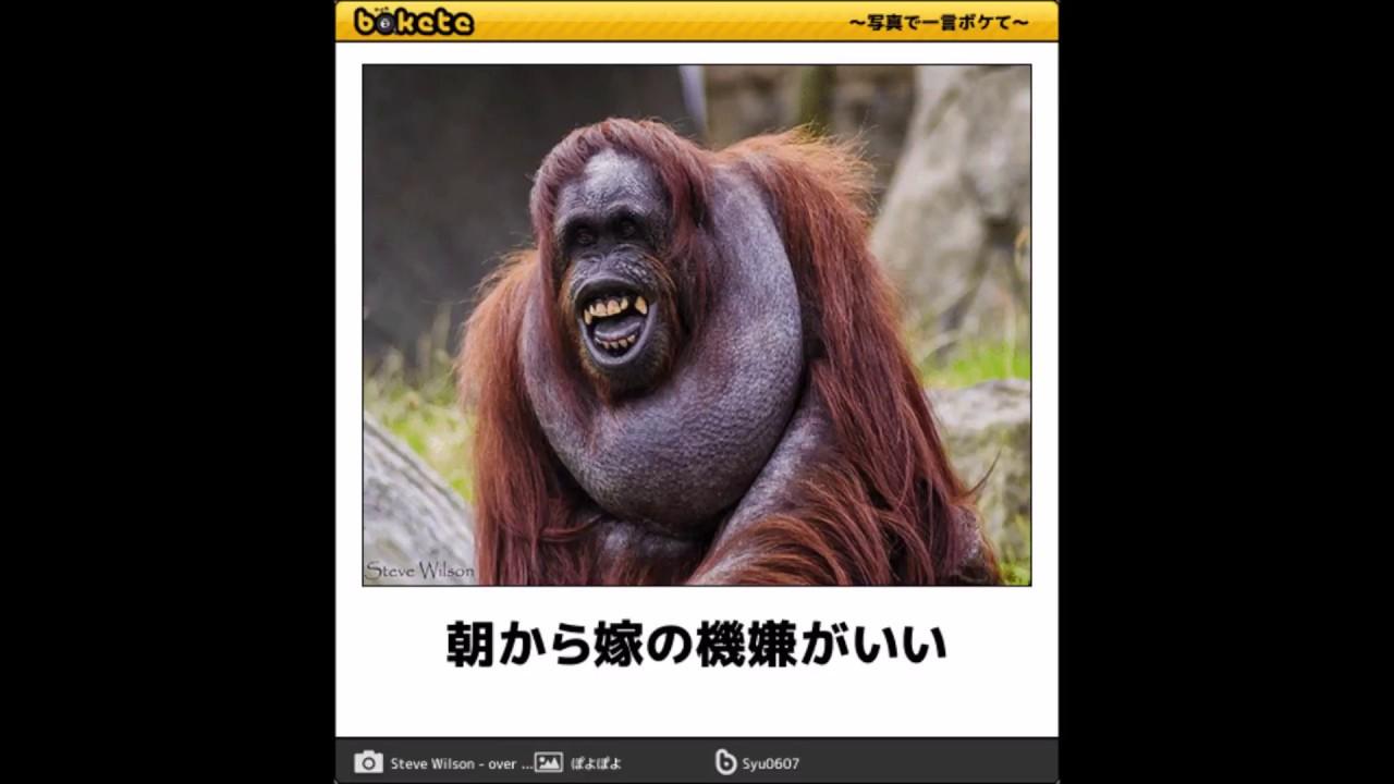 ボケて アンパンマン