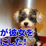 【動物の感動実話】助けを呼ぶその犬は動けない訳ではなかった!その傍らには守るべき存在がいた…