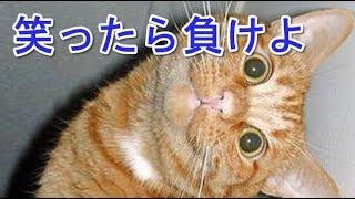 「絶対に笑う」猫のおもしろ・ハプニング動画まとめ⑤