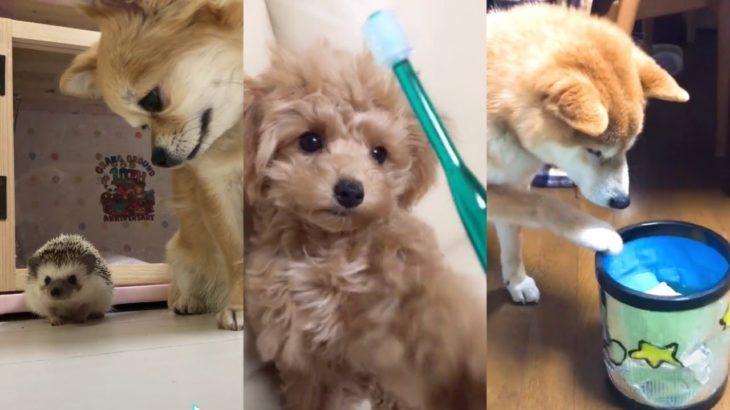 【TikTok】おもしろ犬 思わず笑ってしまう犬の動画