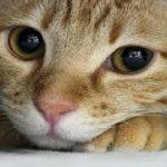【猫 感動話】飼っていた茶トラ猫に泣きながら相談していた私…【ネコの泣ける話】