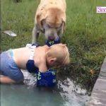 犬の面白い瞬間| 「泣けるほど感動」ご主人が溺れていると勘違いして泣きながら助けに行く犬・犬の声が超かわいい