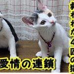 【感動】 殺処分寸前で救われた4匹の猫たち彼らを支えたのは、あたたかい『愛情の連鎖』でした/残酷な話 切ない話 動画 里親・ゲー吐くくらい感動するチャンネル