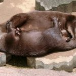 【腹筋崩壊注意!】一瞬で笑えるおもしろかわいい動物画像1