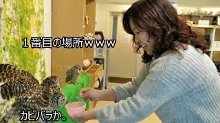|感動大国Japan 海外の反応 驚愕!!日本旅行で驚いた体験がコレ!!「日本ではここまで礼儀正しいのか…」日本各地の衝撃的なスポットに親日外国人が大興奮!!【すごい日本】
