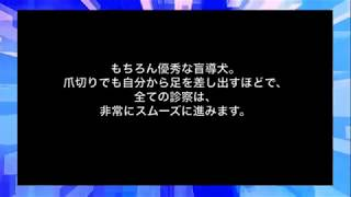 【感動】豹変した盲導犬【号泣必須】泣ける動画まとめちゃんねる