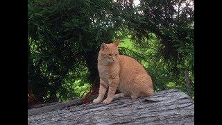 【可愛い猫】思わず笑える最も面白い猫達 癒されること間違いなし【癒されるアニマルセレクト選】