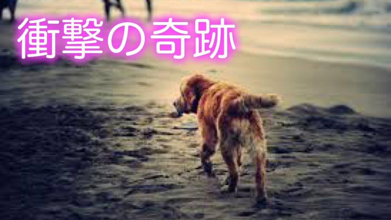 【泣ける話】捨て犬だったレオが起こした衝撃の奇跡。動物 涙腺崩壊 号泣