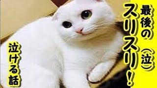 『最後のスリスリ』切なく哀しいお話【泣ける話 感動 動物 猫】動画 里親・ゲー吐くくらい感動するチャンネル