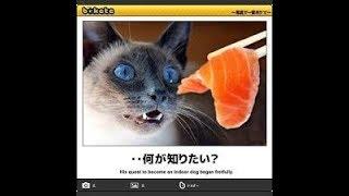【吹いたら負け】最新殿堂入りおもしろボケて ジワジワ来るww ネコのおもしろ殿堂入り画像集  【癒されて笑える!!】