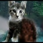 【感動!】山奥でずっと独りぽっちだった野良の子猫。キャンプ中の夫婦の後を追いかけて孤独と別れを告げる!【nekoの部屋】