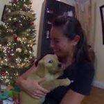 妻へのサプライズで子犬をクリスマスプレゼントした映像が感動する!