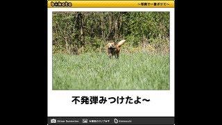 [10秒で笑える]犬のボケてNo.5