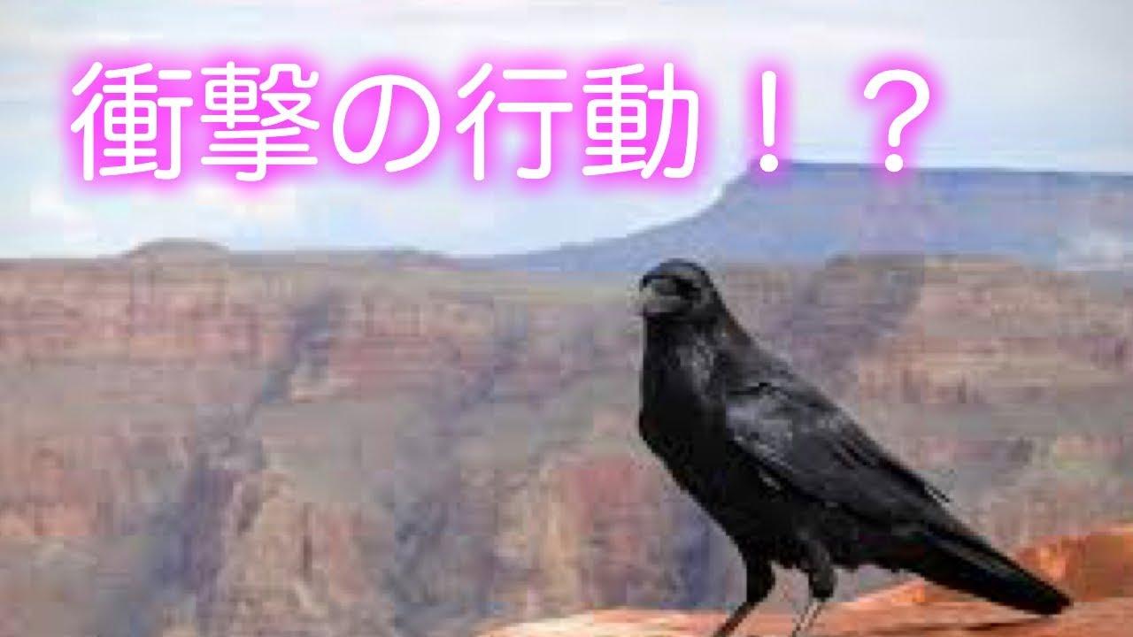【泣ける話】不思議なカラスの衝撃の行動。鳥 涙腺崩壊 号泣