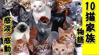 【感涙 感動】猫10匹家族の物語・猫って本当に優しいし泣かせるよ人間なんかよりずっと良い奴らだよマジで!(猫 感動 泣ける話 保護 涙腺崩壊 感涙 動物 動画 里親)ゲー吐くくらい感動するチャンネル