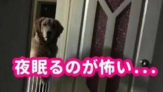 【感動実話】「夜眠るのが怖い」里親に出会えた犬が奇妙な行動をする理由が悲し過ぎた