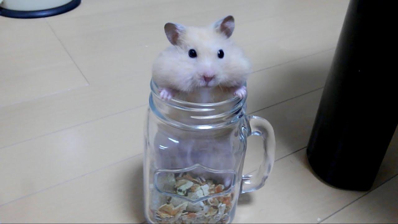 幸せそうなハムスターを見て癒されよう!おもしろ可愛いハムスターHealed by seeing a happy funny hamster