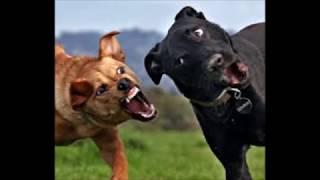 【笑える】面白い犬たちの写真集 パート2