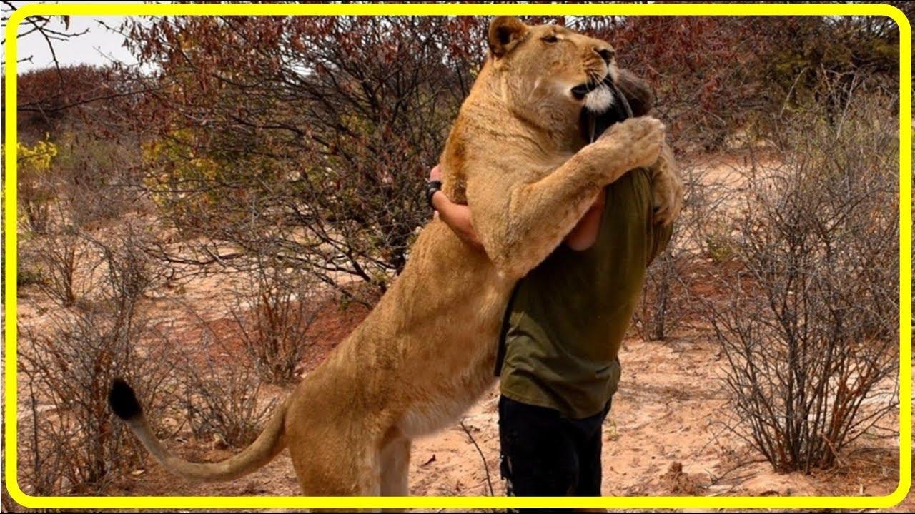 【感動!】瀕死状態の幼いライオンを救った男性…その後、久しぶりの再会の様子に涙!【世界が感動!涙と感動エピソード】