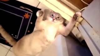 かわいい猫 – おもしろ猫 – 面白い猫の動画 Funny Cats Compilation Part 1