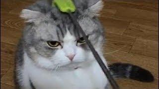 猫 かわいい – 猫 おもしろ – 最も面白い猫の動画 ( p28) !!!2017年5月1日