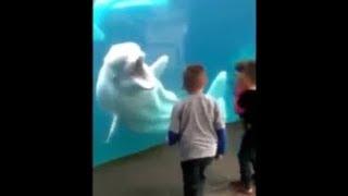 【動物 おもしろ】水族館のシロイルカ!子供をめちゃくちゃ煽る姿が爆笑【爆笑ファニーチャンネル】