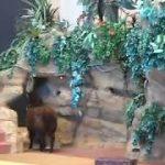 あらゆる種類の動物が次々登場!驚きのアニマルショー