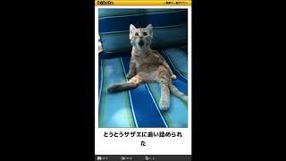 10秒で笑えるボケて猫編32(去勢,干支,動物病院,犬,花瓶,天国,大喜利)