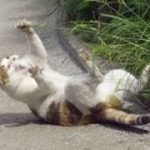 【笑える】面白い猫好きのためのGIF動画