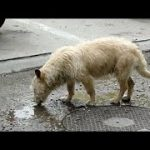 感動 犬 救助 その野良犬は飼い主に無理やりマイクロチップを除去され捨てられた犬だったが…