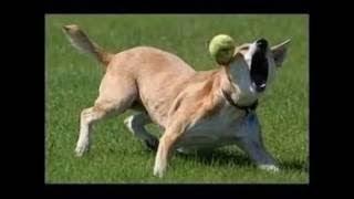 犬おもしろ動画 少し笑えるイヌ画像集 (funny dog pictures)