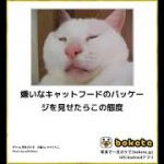 10秒で笑えるボケて猫編33(去勢,干支,動物病院,犬,花瓶,天国,大喜利)