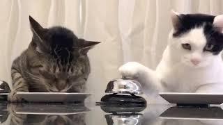 おバカちゃん!愛らしい笑える動物動画まとめ☆Ciao!