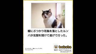 10秒で笑えるボケて猫編39(去勢,干支,動物病院,犬,花瓶,天国,大喜利)