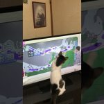 ネコおもしろ動画。