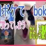 【ボケて bokete  爆笑】週刊 ボケて 思わず笑ってしまう おもしろ傑作集 #24