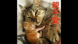 【感動】いつも世話してくれる女性を呼び止めた野良猫。保護の2時間後に、まさかのサプライズが (*゚0゚)!