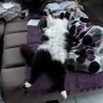 【おもしろかわいいネコ】おもしろくてかわいいネコの動画【世界の子猫ちゃん寝る】