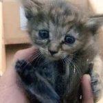 『世界一幸せになった捨て猫』 泣ける感動話♪112