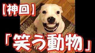 【神回】可愛すぎる笑う動物たち^^おもしろ!ハプニング!犬 猫 動物 爆笑