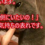 【衝撃】驚き!ネコがあなたを噛む時の本当の理由は何か?! 【感動ダイアリー】