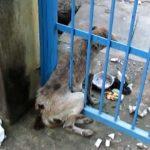 動物の救助♡ 救助されたひどく負傷した老犬 【泣ける動画】