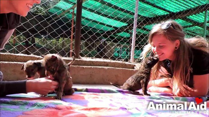 【動物救助】可哀相過ぎて泣ける。最高の救出劇。見つけてくれて良かった。救出された犬達。【アニマルレスキュー感動動画】