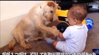 【感動実話】犬と少年の絆 前向きに生きる姿勢を教えられました!