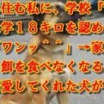 【泣ける話】山奥に住む私に、学校『愛犬との通学18キロを認める』愛犬「ワンッ^^」→家を空けると、餌を食べなくなるほど私を溺愛してくれた犬が・・・・・・